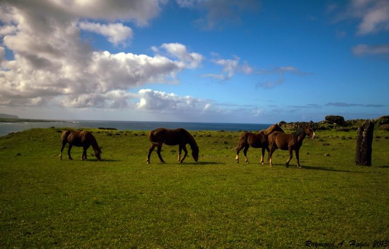 EasterIslandhorses