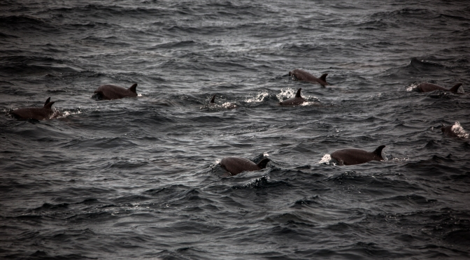 A pack of dolphins