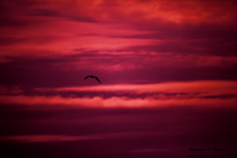 seagullEveninglight