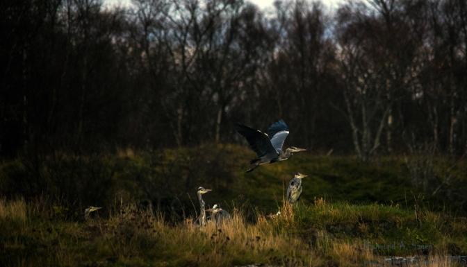 Some birdwatching ….