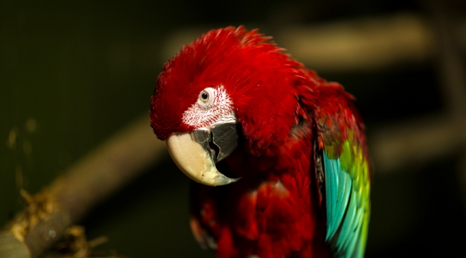Picture of the day: Parrot up close and personal