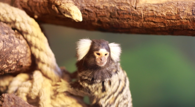 Picture of the day: A small ape in Oslo reptile park