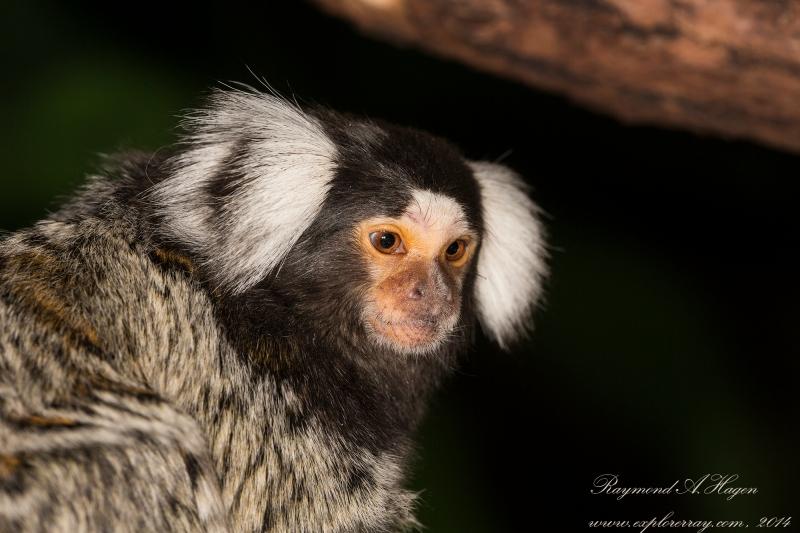 ape-reptilpark-downsized