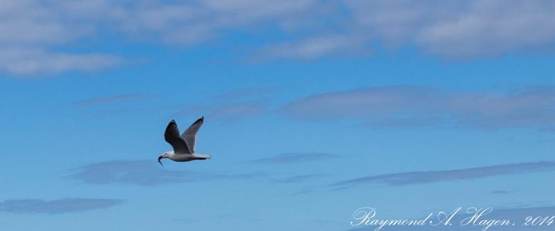 seagullSnack